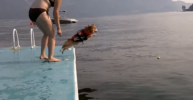 dog-flops-on-water-2