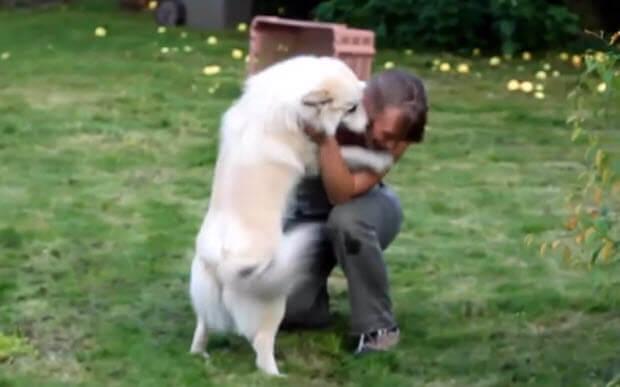 dog reunion 2016