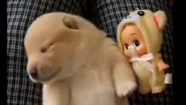 funny-sleeping-dogs