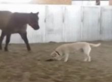 horses are dogs best friends
