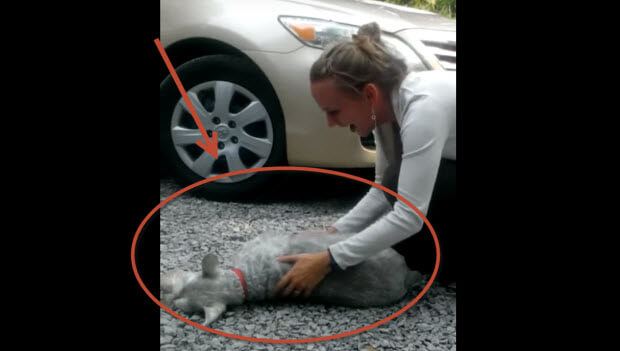 schnauzer reunited with owner passes-out