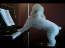 singing-piano-playing-dog