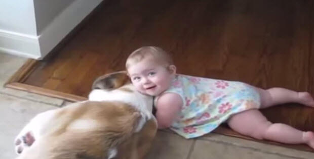 babies-dogs-cats4