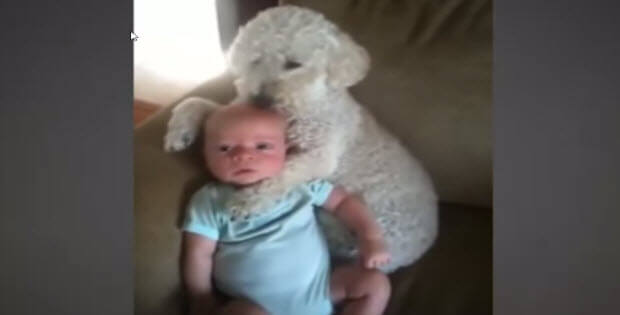 babies-dogs-cats5