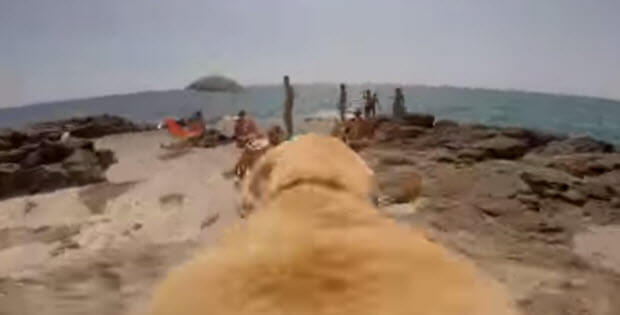 dog running towards the water