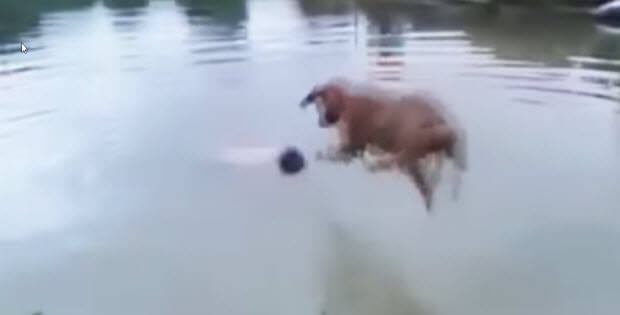 dogs-jump-to-help1
