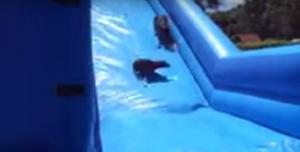 dogs on a slide 2