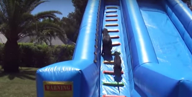 dogs on water slide