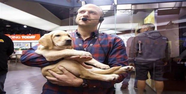 labrador-puppy-being-carried-around
