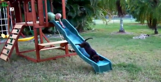 Puppies-going-down-the-slides1