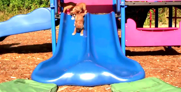 Puppies-going-down-the-slides2