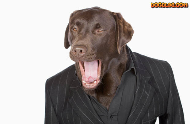 choc-lab-in-suit