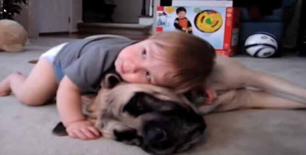 cute-boy-with-mastiff4