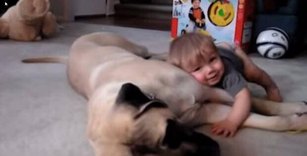 cute boy with mastiff