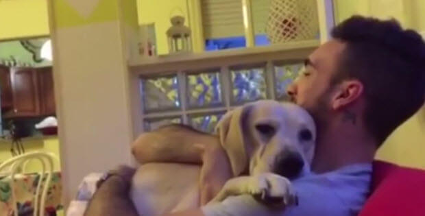 dog-begs-for-forgiveness1