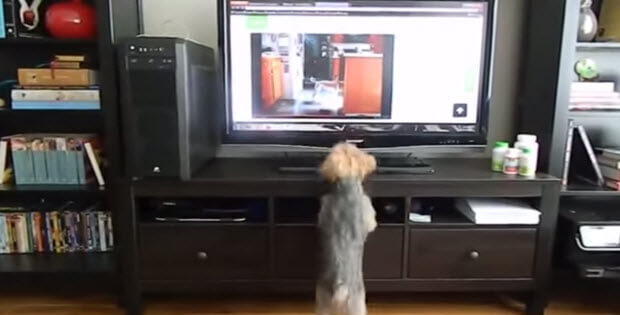 dog-jumping-infront-of-tv2