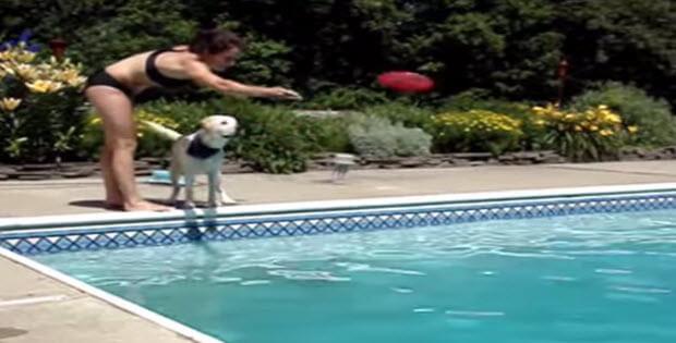 jack-labrador-swim3