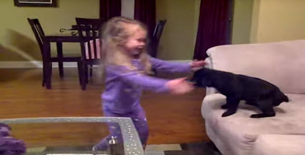 little-girl-gets-lab-puppy