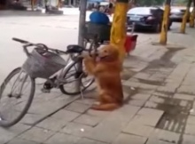 Dog Guards Bike