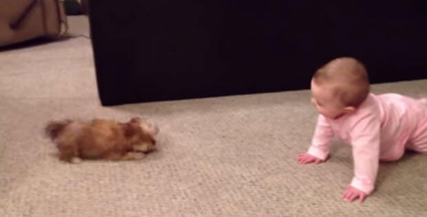 cute-puppy-and-baby2