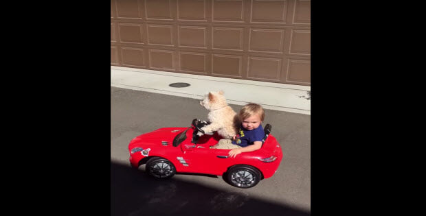 dog-drives-car-with-baby1