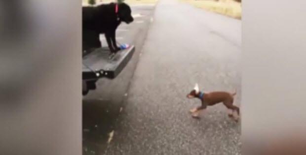 dog-jumps-back-truck-misses1