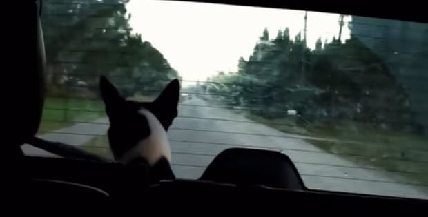 pooches-react-to-windshield-wipers1
