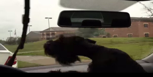 pooches-react-to-windshield-wipers2