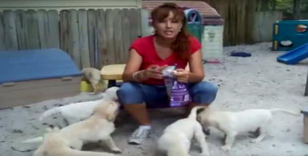 puppies-eating-treats1