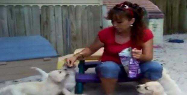 puppies-eating-treats3