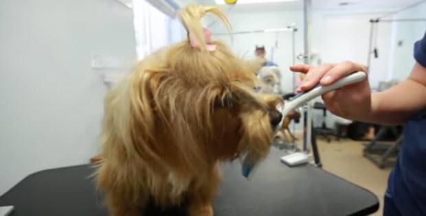 dog-bad-breath1