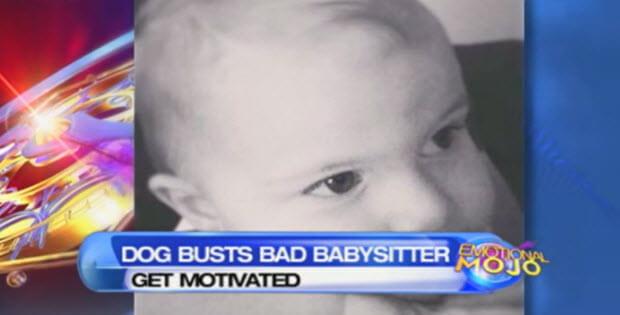 dog-busts-babysitter