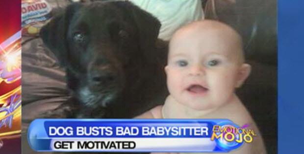 dog-busts-babysitter1