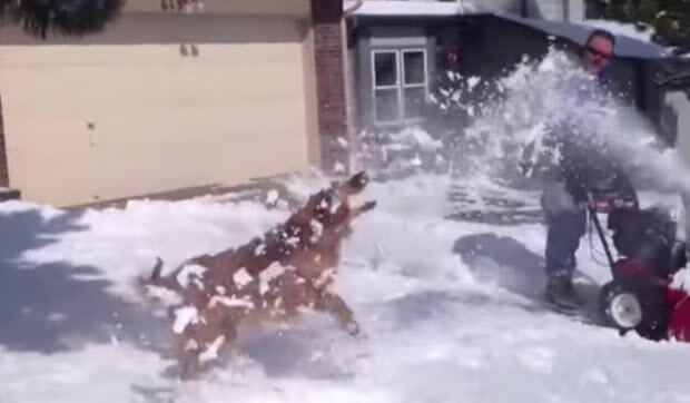 dogs-enjoying-snow