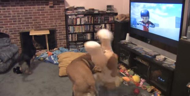dogs-favorite-cartoon-bolt2