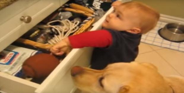 labrador-retriever-and-baby-partners-in-crime1