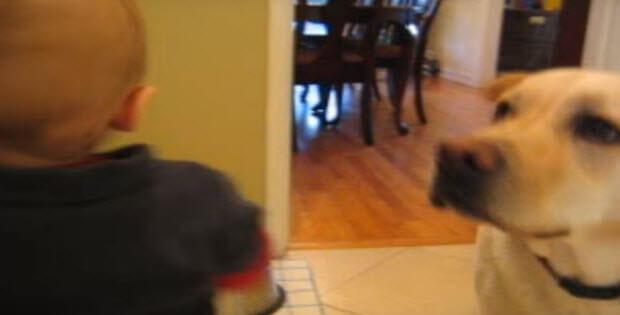 labrador-retriever-and-baby-partners-in-crime2
