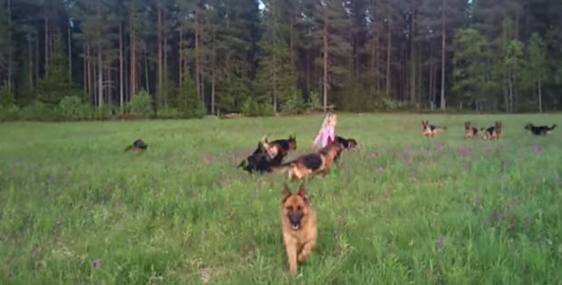 little-girl-with-german-shepherds1