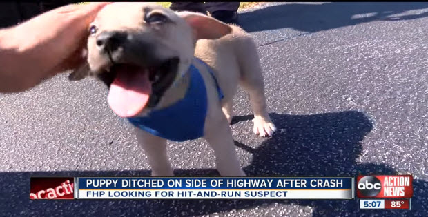 puppy-ditched-on-side-road