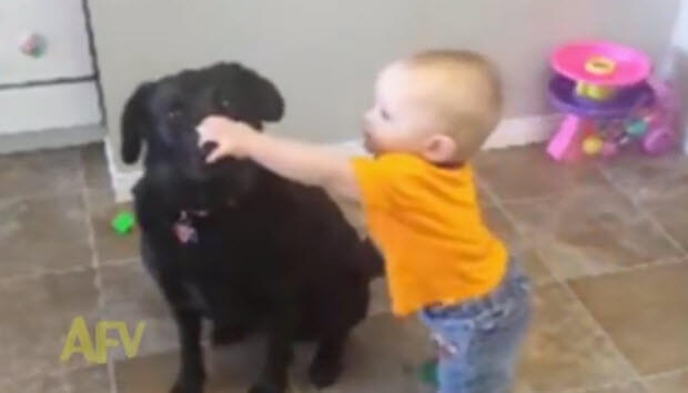 baby-eats-labradors-treat
