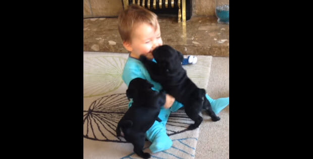 baby-playing-with-two-puppies-dogs-main