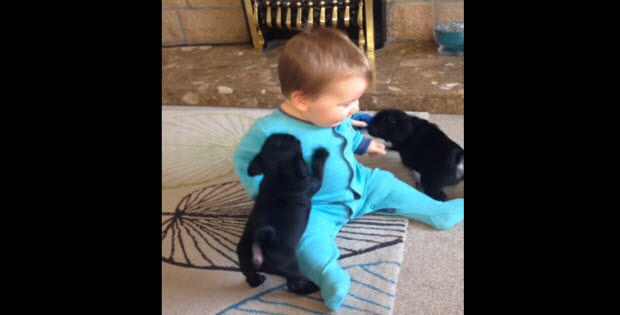 baby playing with puppies