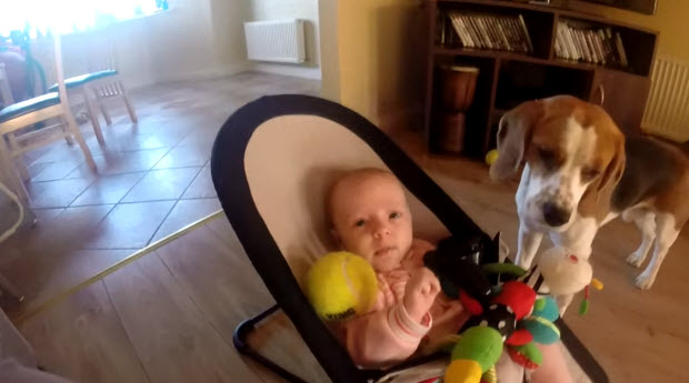 dog-steals-babys-toy