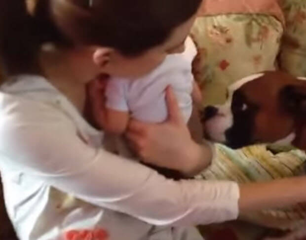 dogs meet babies first time