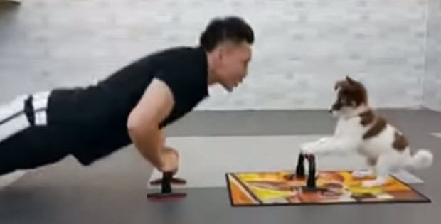 puppy-dog-is-doing-pushups-with-owner