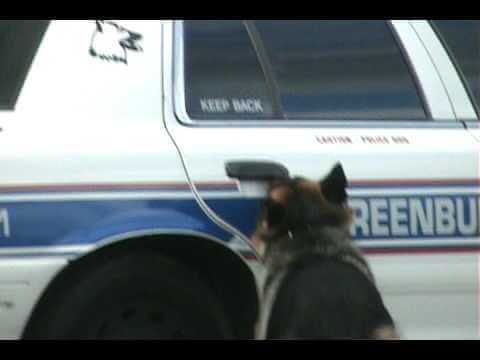 This Policeman Asked Not To Share This Video Demo of His German Shepherd K9