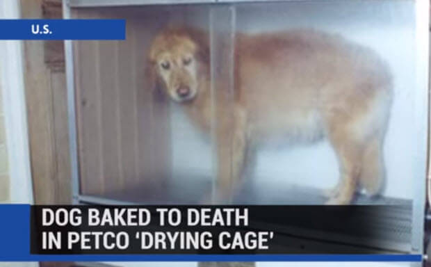 dog-baked-alive-at-petco1