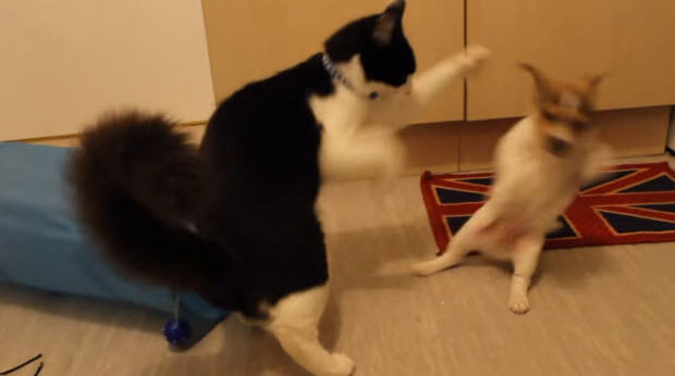 dog-meets-two-puppies-3