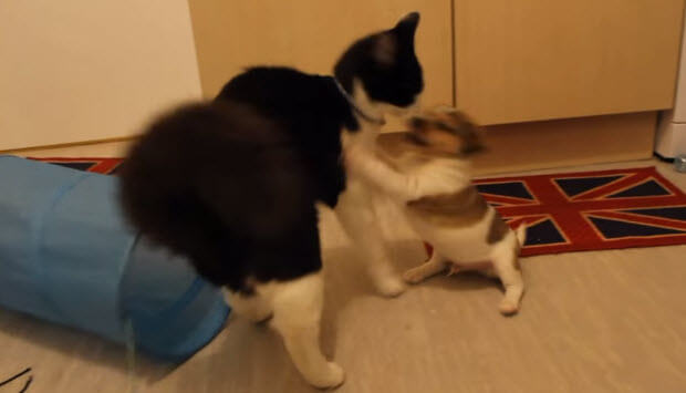 dog-meets-two-puppies-4