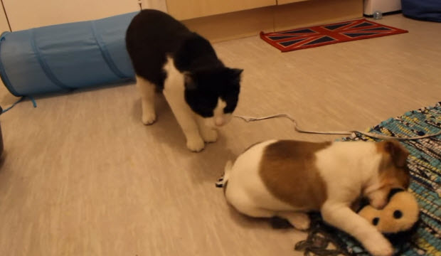 dog-meets-two-puppies